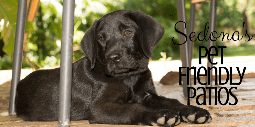 Going out for dinner doesn't have to mean leaving your fur baby at home thanks to these awesome restaurants with Pet Friendly Patios in Sedona.